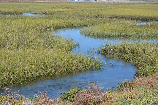 Cordgr At Seal Beach National Wildlife Refuge Was The Location Of