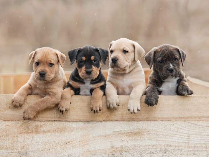 Here Are The Most Popular Dog Breeds In San Francisco For 2020