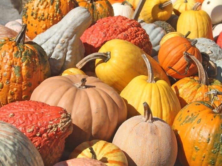 Pumpkin Patches Near Piedmont 2020