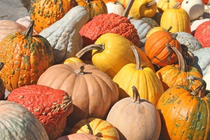Halloween 2020 In Moorpark Oct 25   Pumpkin Patch & Harvest Fun 2020: Underwood Family Farms