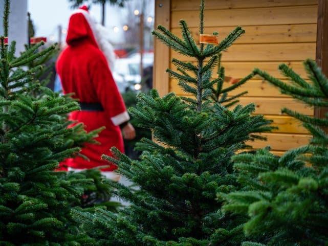 Nov 20   Clayton Valley Pumpkin Farm & Christmas Trees ...