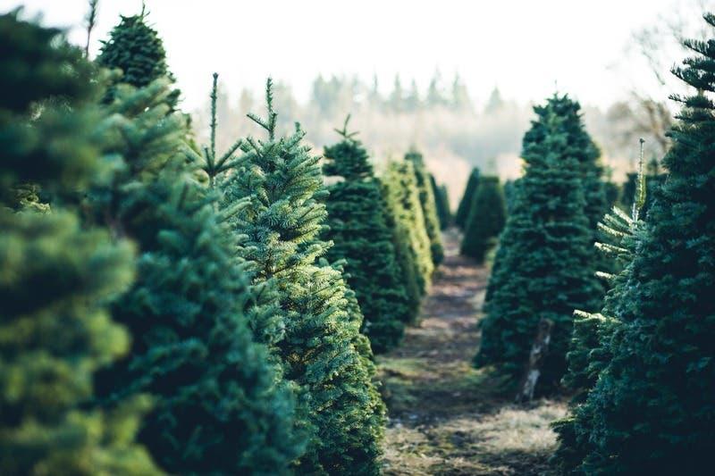 Nov 27   Silveyville Christmas Tree Farm 2020: Dixon   Elk Grove, CA Patch