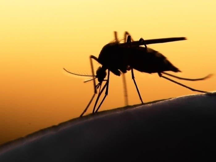 Eastern Equine Encephalitis Caution Issued At Joint Base