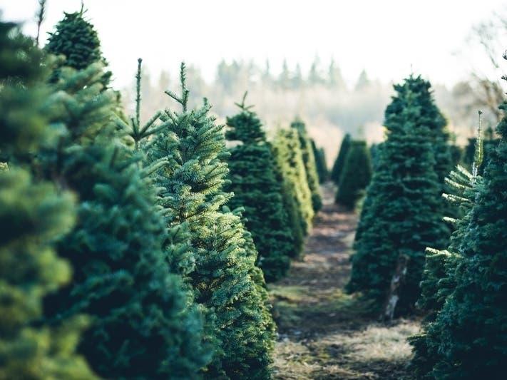 Herndon Va Christmas Tree Lighting 2020 When And Where To Buy Christmas Trees Around Herndon | Herndon, VA