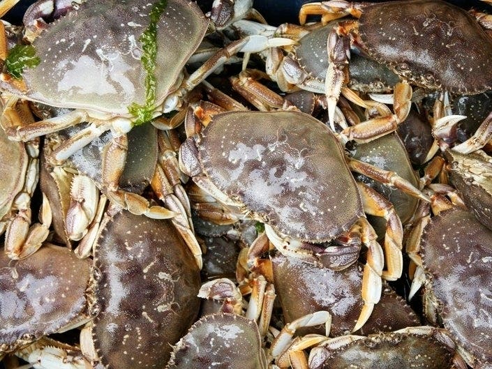 Commercial Dungeness Crab Season Delayed In Bay Area - Patch.com
