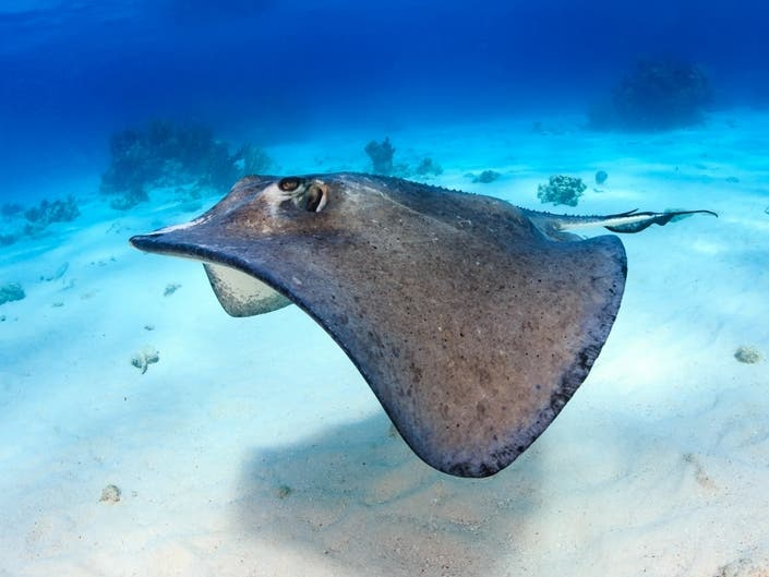 Unlucky Boater Gets Stung By Stingray Off Jones Beach