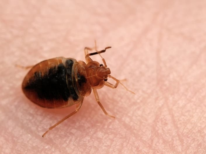 Washington, D.C., ranked as the most bed bug-treated city in the country, according to Orkin.