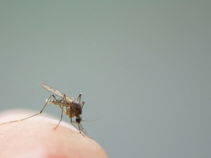 Third Mass. West Nile Case Hits Middlesex County