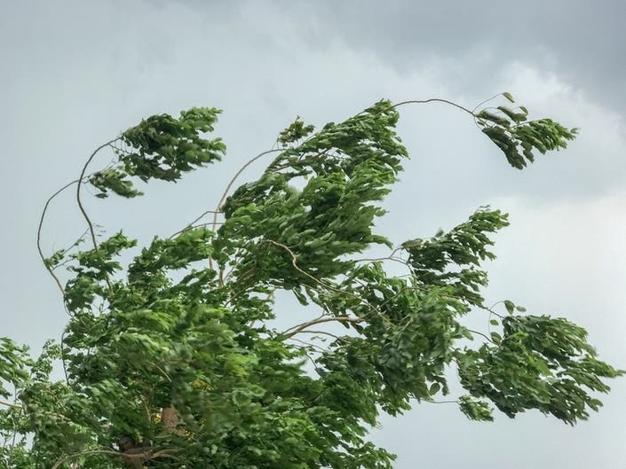 45 MPH Wind Gusts Expected, Power Outages Reported Across IL