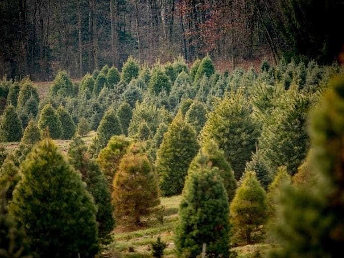 Where To Find A Christmas Tree In 2020 Near Ramsey