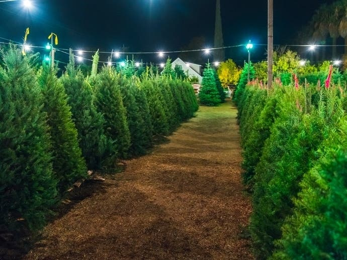 Where To Find 2020 Christmas Tree Sales Around McLean | McLean, VA Patch