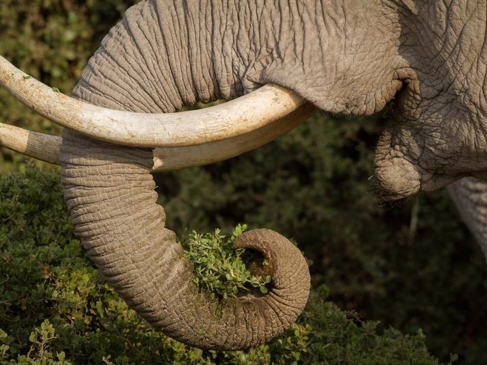 Bronx Zoo Elephant Is Not A Person, Judge Rules