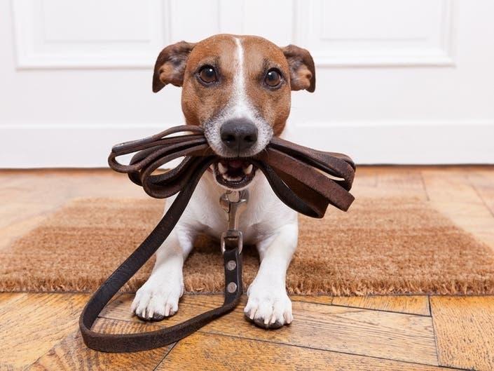 Earthquake Preparedness For CA Pet Owners