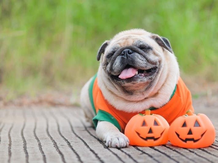 Halloween Party 2020 Culver City Culver City PetSmart To Host Halloween Party For Pets | Culver