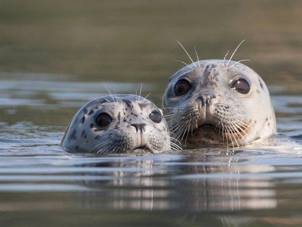 'Buy Shirt To Save Seals': Marine Mammal Care Center Fundraiser