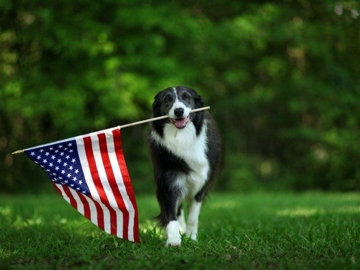 Dogs And July 4 Fireworks Don't Mix: Check Metro Denver Shelters