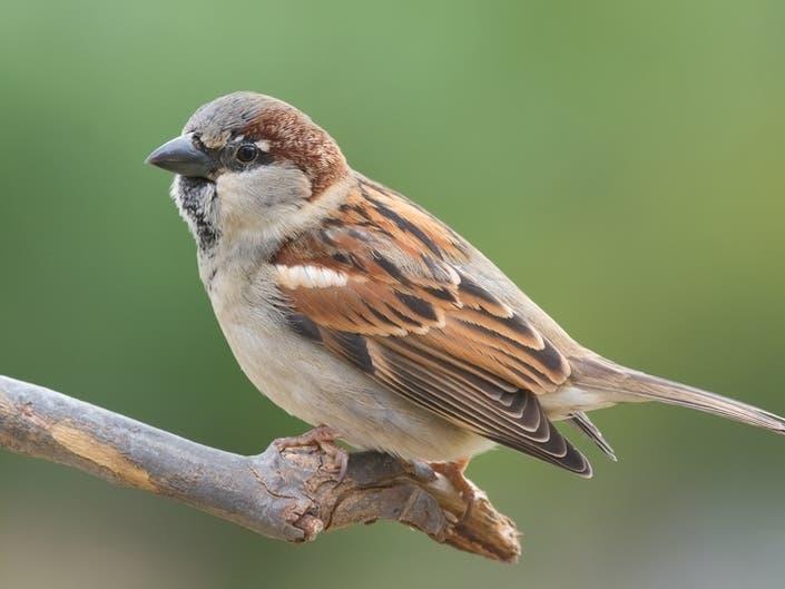43 Birds In RI Vulnerable To Climate Change: Audubon