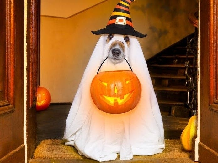 How To Trick-Or-Treat, Celebrate Halloween Safely In MoCo