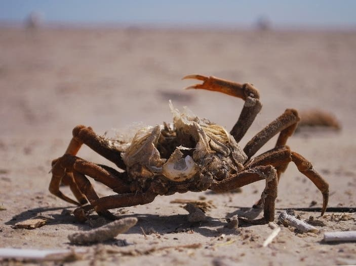 Maryland Crabbing Violations Top 2K From 2013 To 2018