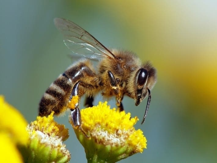 Scotch Distillery Partners With Beekeepers, Bartenders To Support Bee Colonies