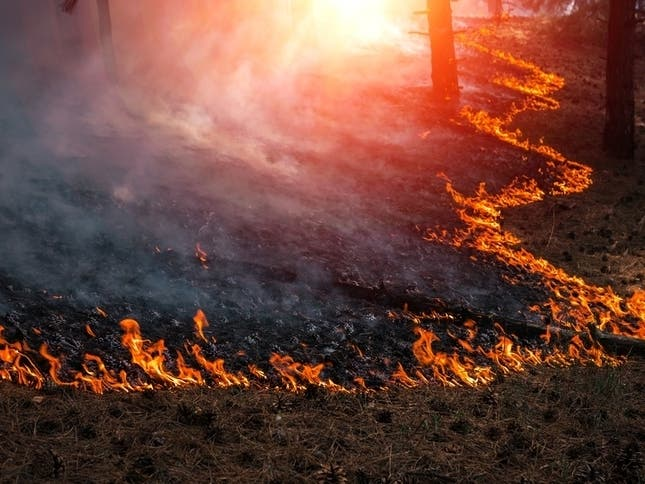 Controlled Burns To Send Up Smoke In San Mateo County