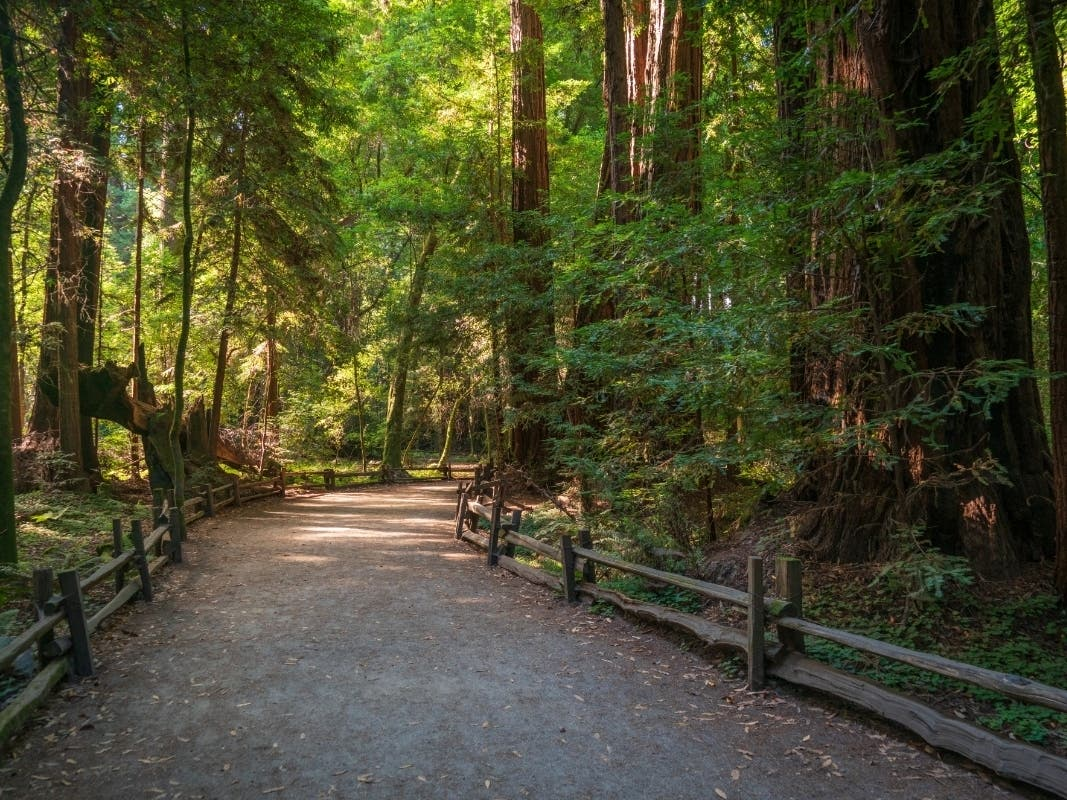 These 164 California State Parks Have Reopened To Visitors