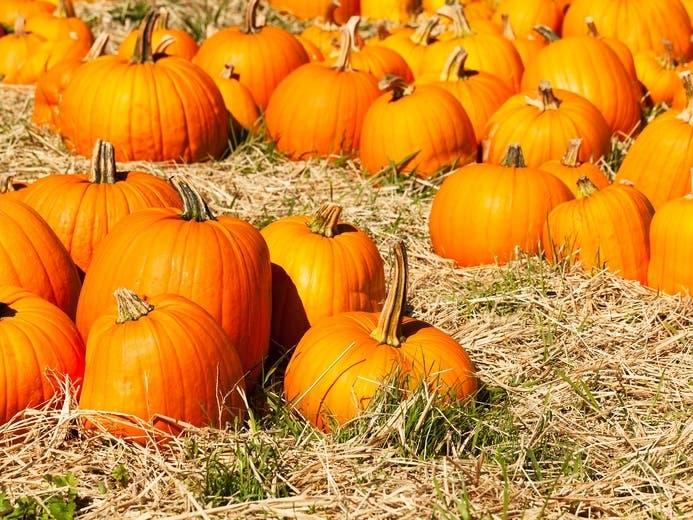 Buffalo Grove Halloween Hours 2020 Buffalo Grove Area Halloween 2020: Pumpkin Patches, Corn Mazes