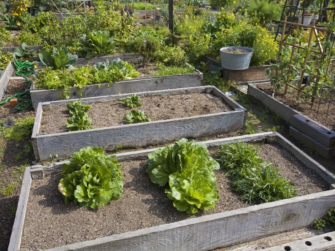 Forest Hills' Community Garden Reopens To The Public On Saturday
