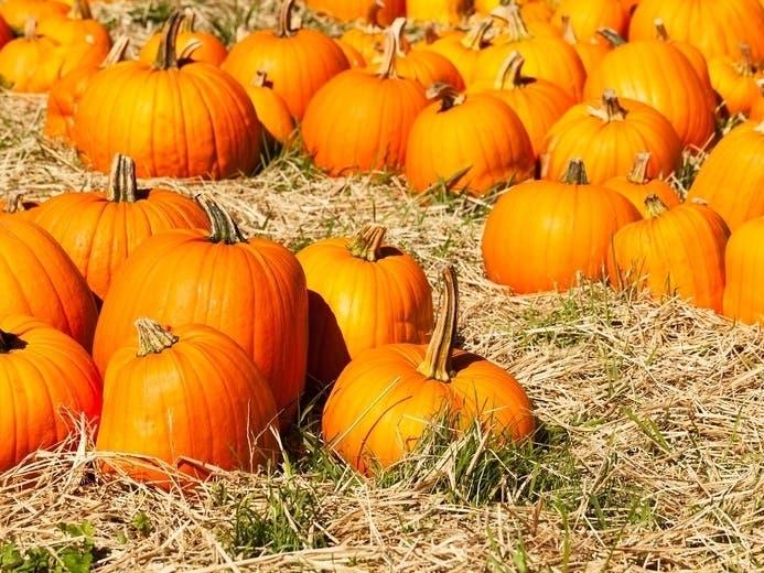 Halloween Hours Oak Park Il 2020 Oak Lawn Area Halloween 2020: Pumpkin Patches, Corn Mazes, Event