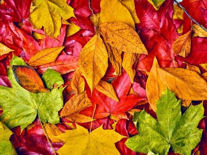 Fall Foliage Peak Map 2019: When Autumn Leaves Are Best On LI