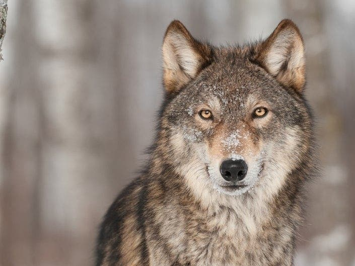 NJ Family Attacked By Wolf In Something Out Of A Horror Movie