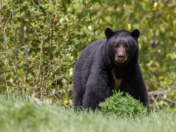 Bear Attack | $1 Million Scratcher | Deputy Shot | Patch PM