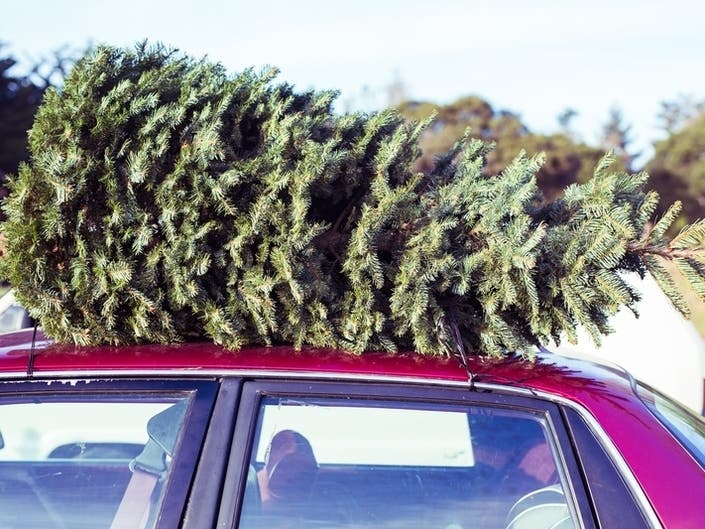 Boy Scouts Want Your Christmas Trees: Pleasanton Troop 941