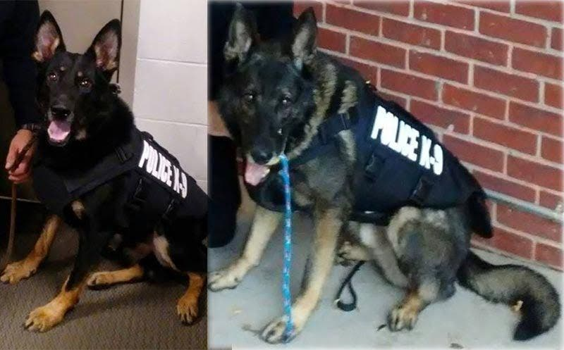 Rocky the police dog saved the day — then refused to follow orders!