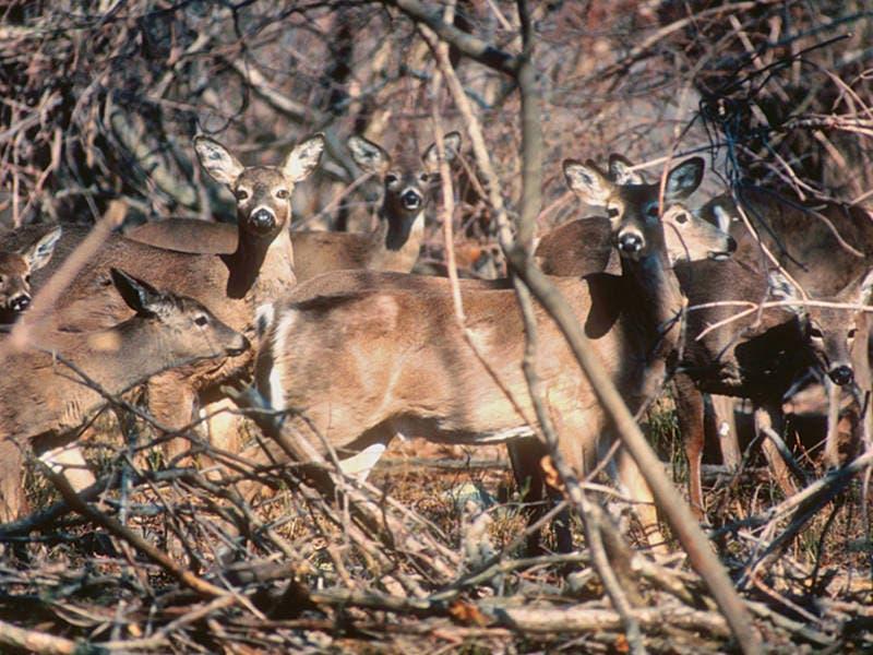 DEEP, AAA Send Out Deer, Moose Warning For State Roads ...