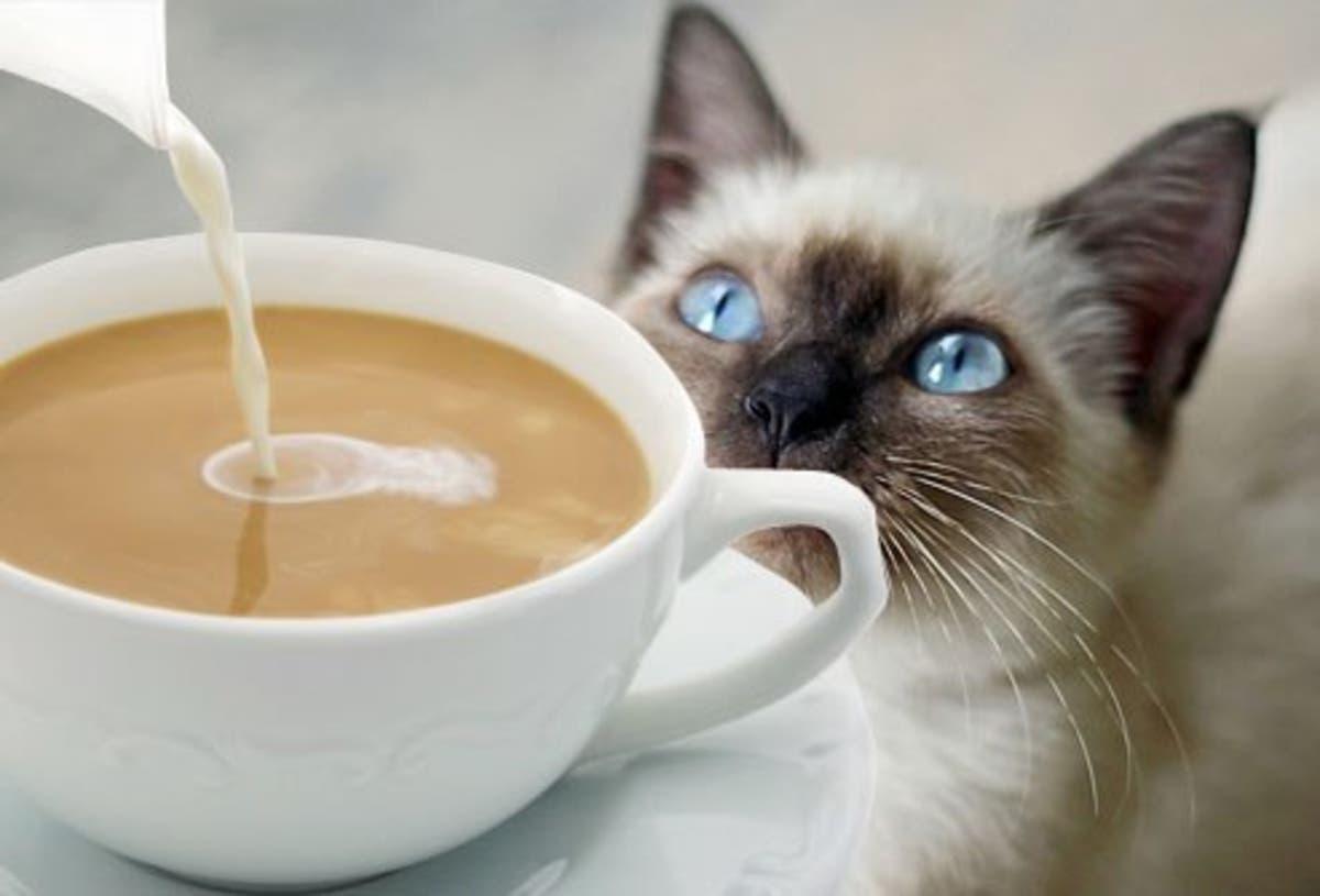 Opening A Kitten Kadoodle Coffee Cafe | Sachem, NY Patch