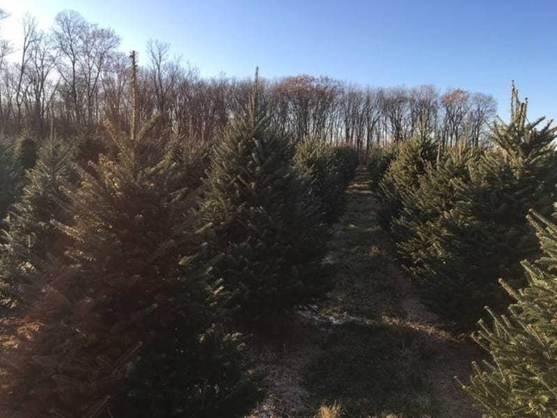 Places To Cut Down Christmas Trees In Nj