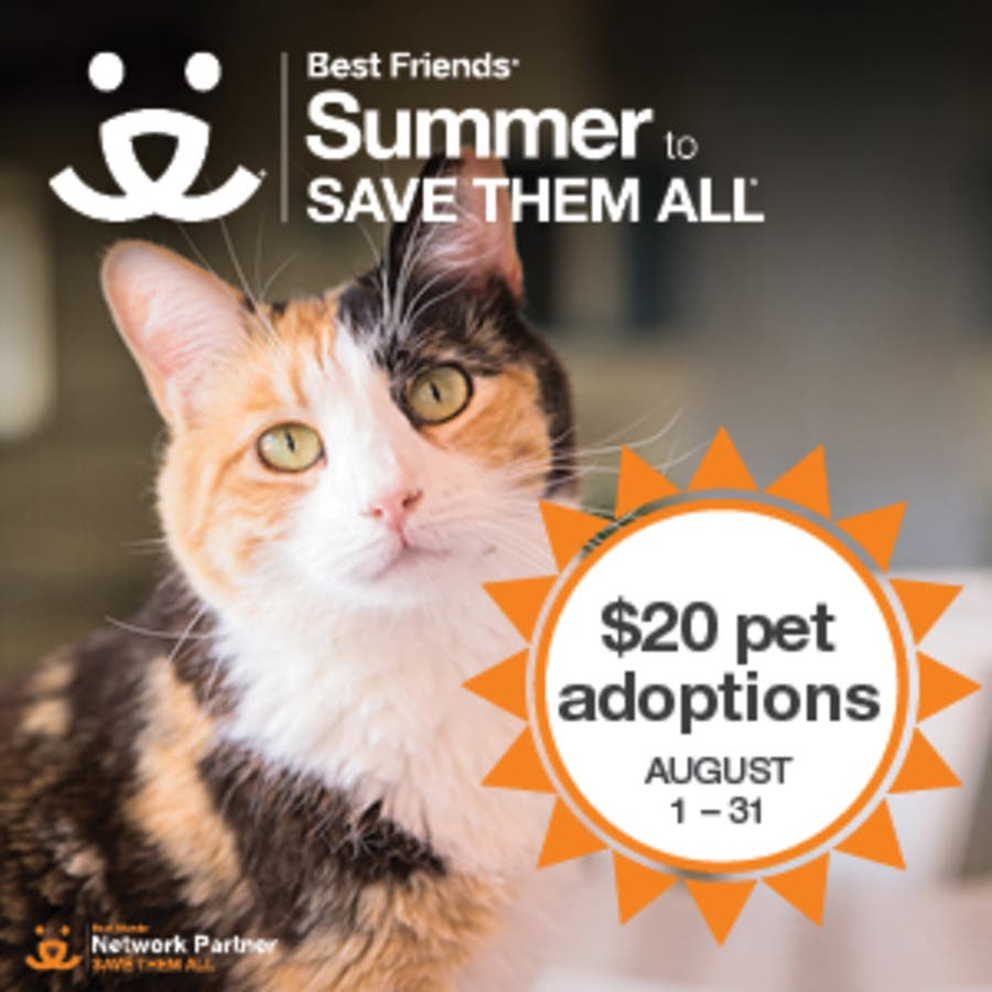 20 Pet Adoptions In August At Paws For Life Rescue Troy Mi Patch