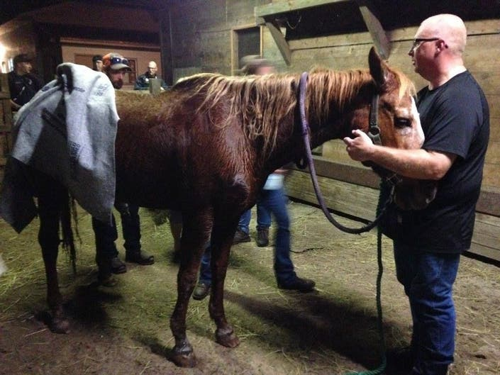 peeper busted  horse rescued  florida recount lawsuit