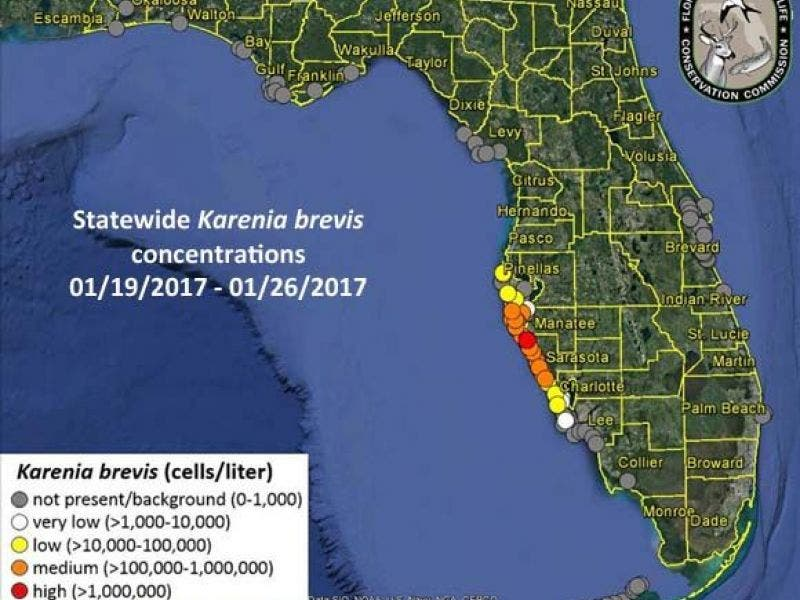 West Florida Beaches Map.Red Tide Woes Continue Along West Florida Coast Sarasota Fl Patch
