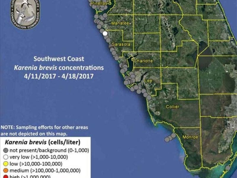 Red Tide Levels Improve In Tampa Bay Area Bradenton Fl Patch