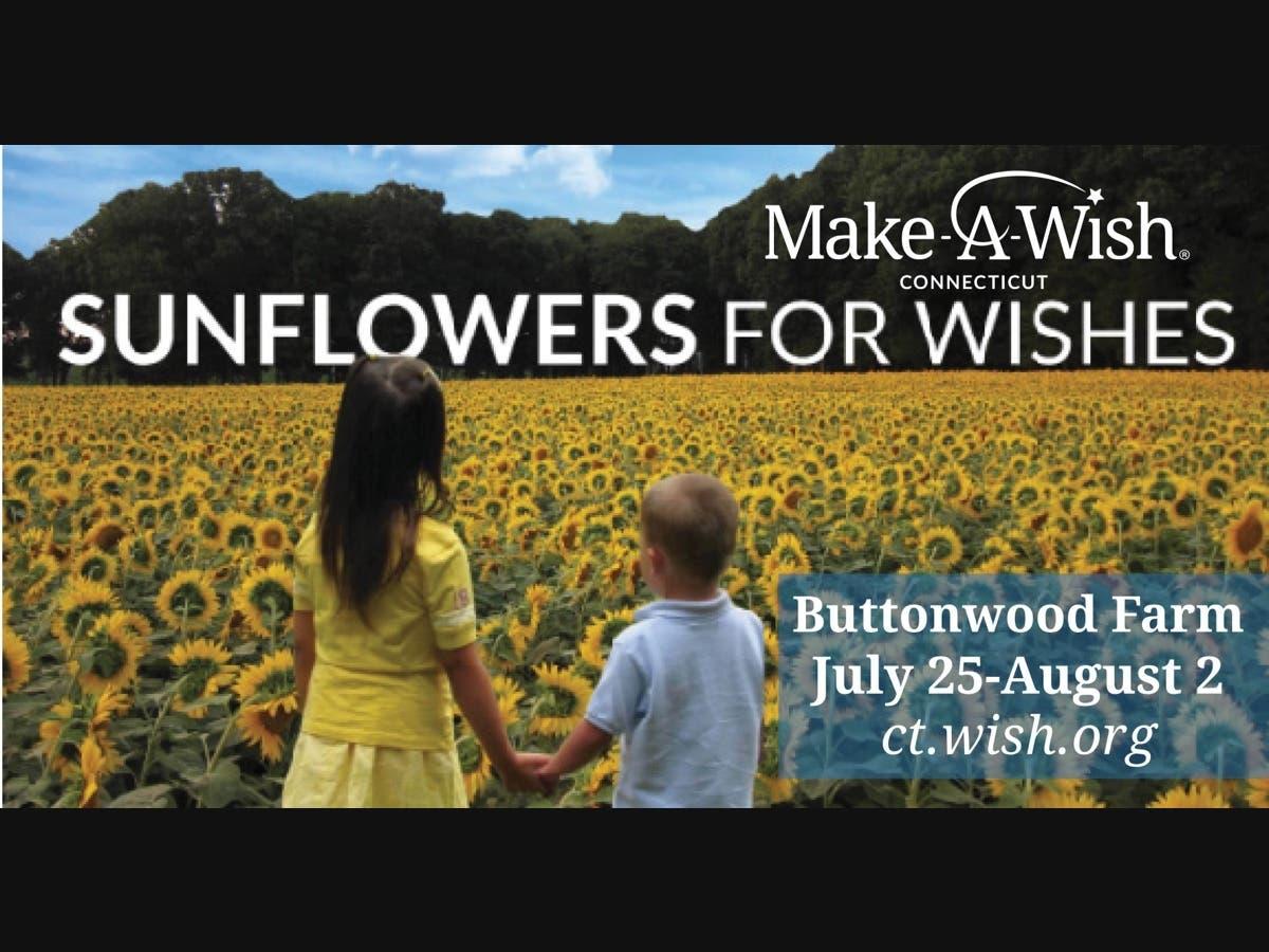Witness 450,000 Sunflowers in Bloom!