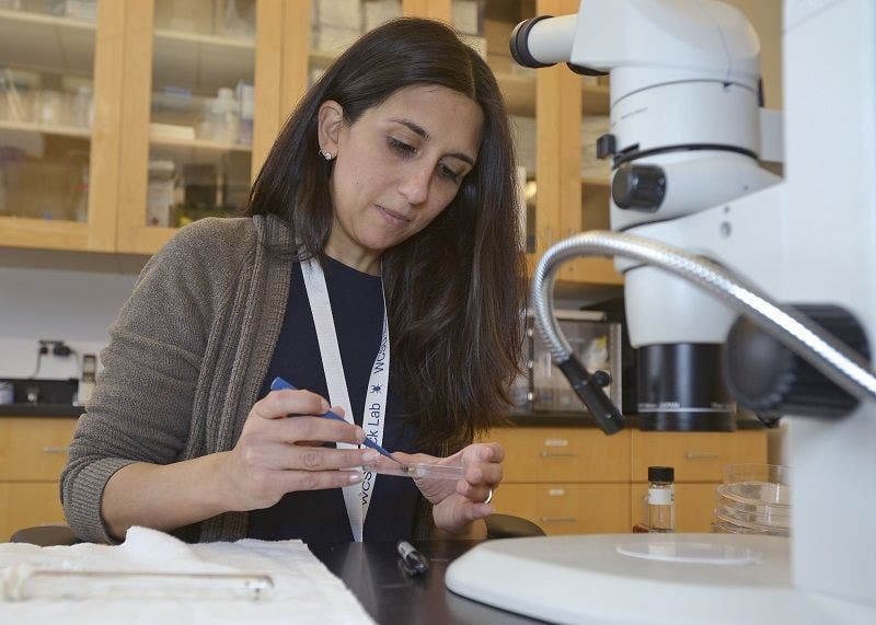 Wcsu Professor Receives Largest Research Grant In