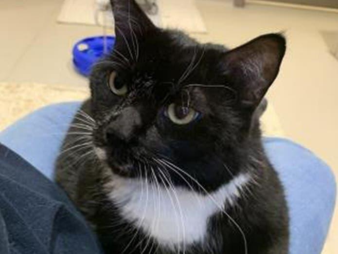Bucks Co. SPCA Wins Custody Of Cats In Doylestown Hoarding ...