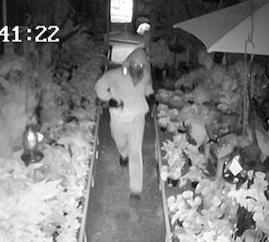 Garden Center Burglary Under Investigation In Upper Makefield