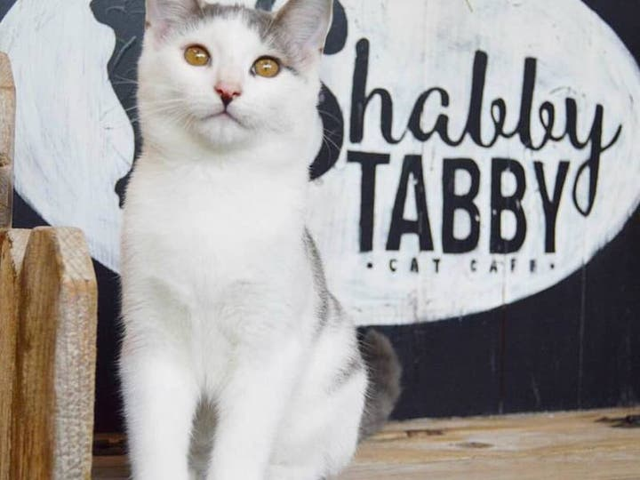 Long Island Gets a Cat Cafe