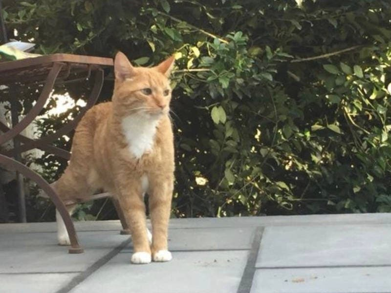 Family 'Devastated' After Beloved Cat, Fred, Goes Missing