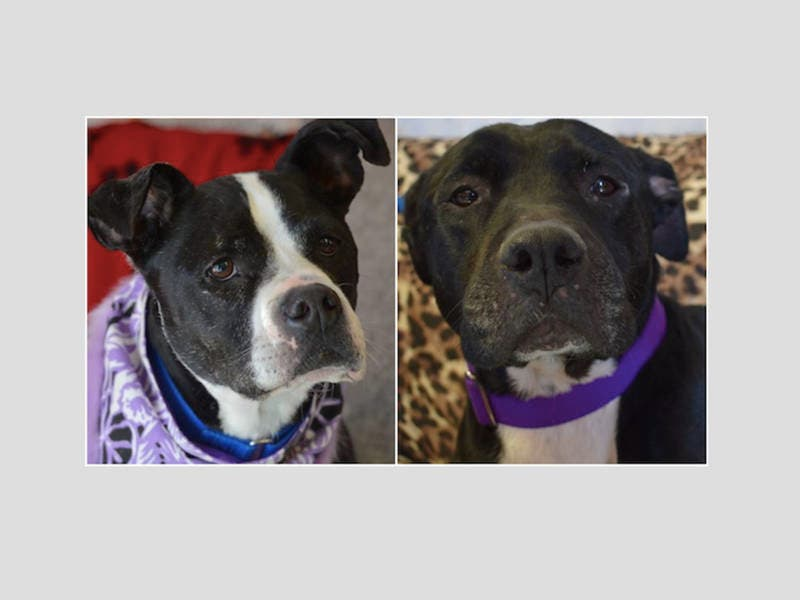 2 Senior Dogs Crying At Shelter After Losing Their Families