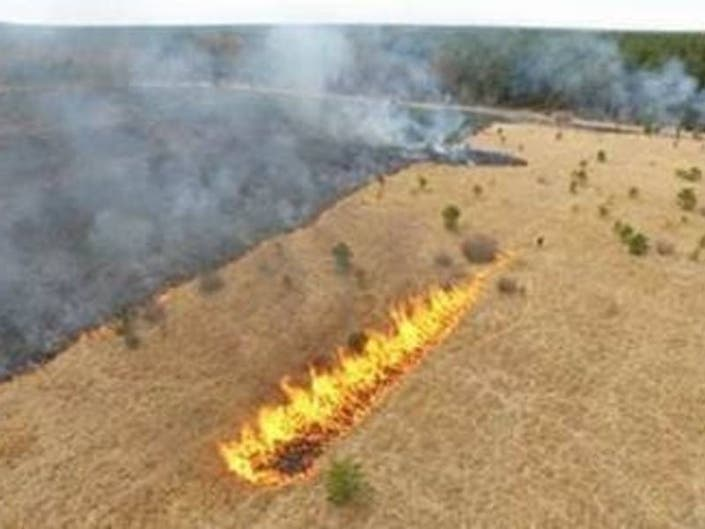 Forest Rangers Stage Prescribed Fires At Preserve