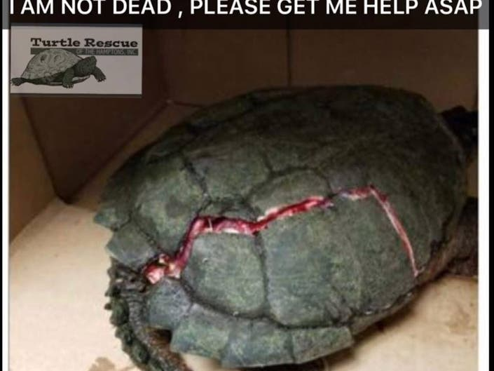 Womans Turtle ER Heals Broken Shells: Video